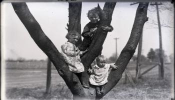 Red Deer Archives, G2244; Three children climbing a tree, 1912