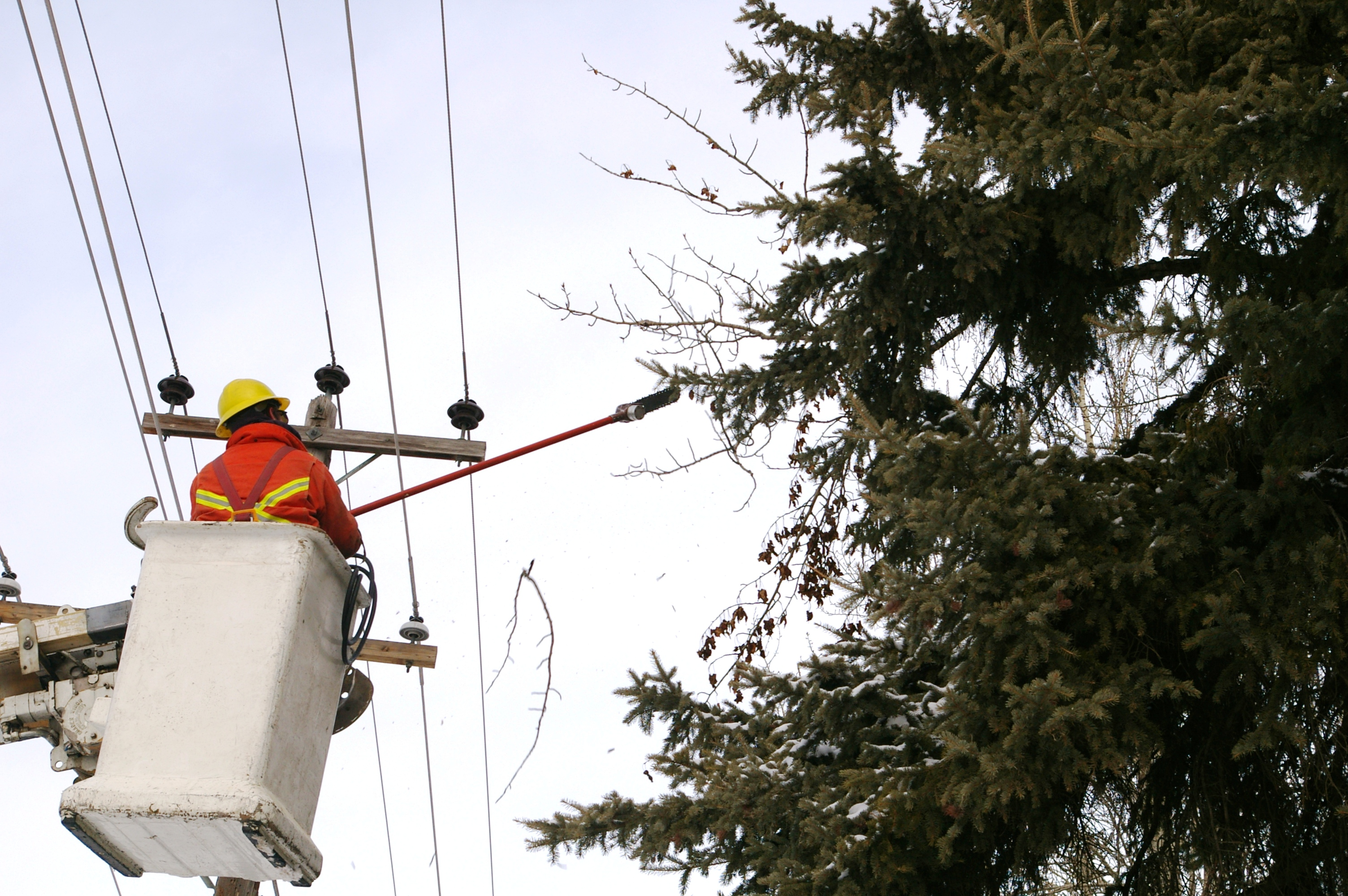 Trees and Power Lines - The City of Red Deer
