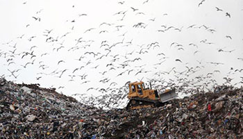 Red Deer Dump >> Garbage Recycling Organics The City Of Red Deer